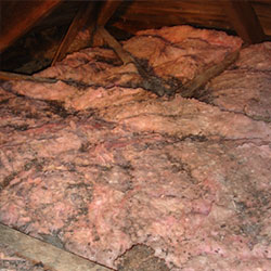 Old Insulation